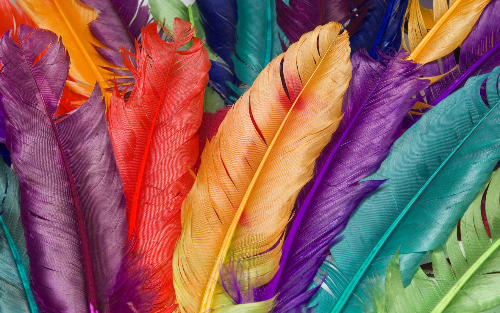 colorful_feather_001013